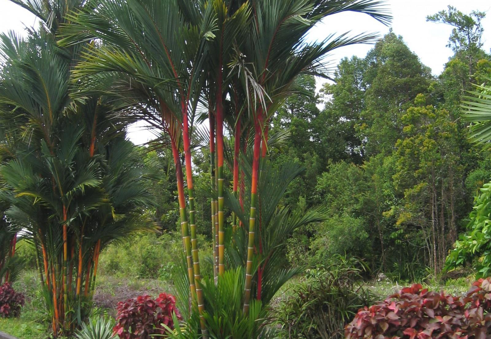 Borneo džungļi