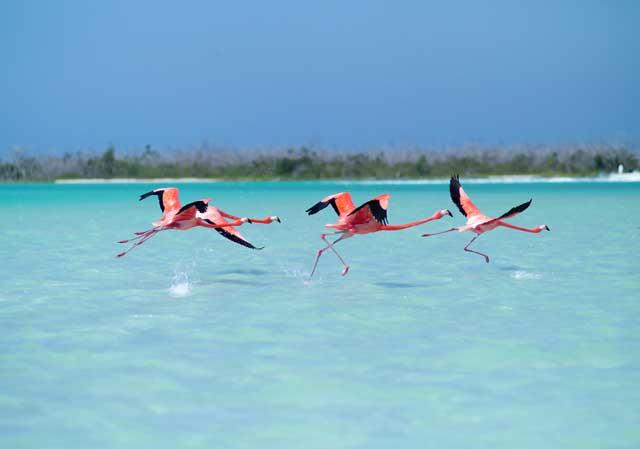 Фламинго в заповеднике Ria Lagartos
