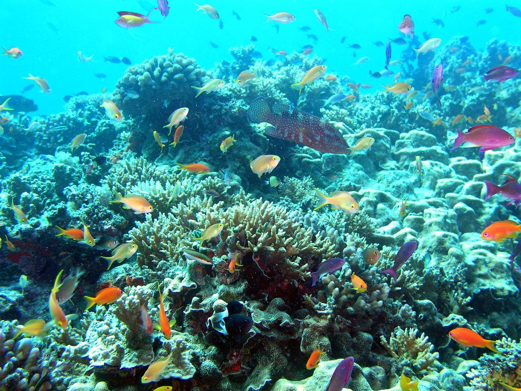 Кораллы в Австралии