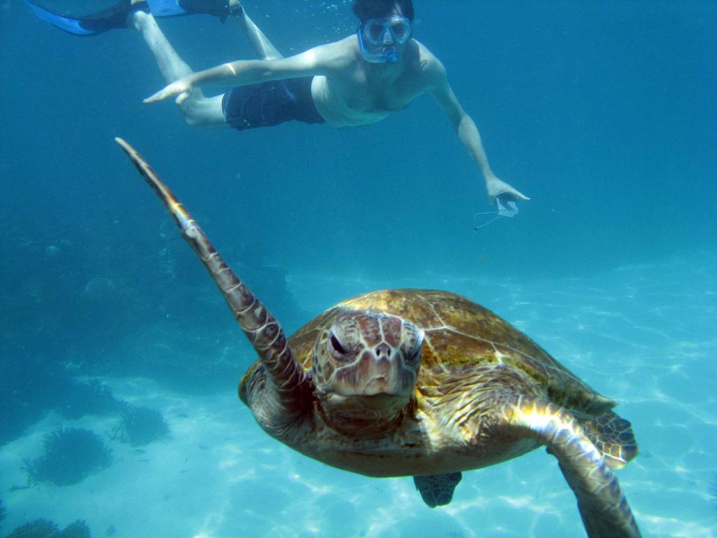 Zemūdens peldēšana uz Ningaloo rifa