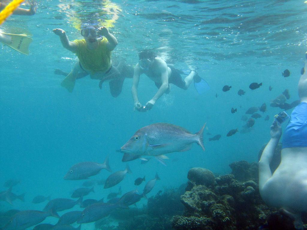 Подводное плавание в Австралии